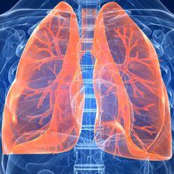 Биологически-активные добавки для дыхательной системы