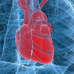 Пептидная продукция для сердца