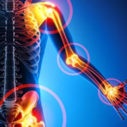 Peptide products for musculoskeletal system