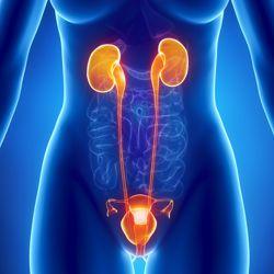 Биологически-активные добавки для женской половой системы