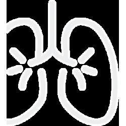 Патология дыхательной системы